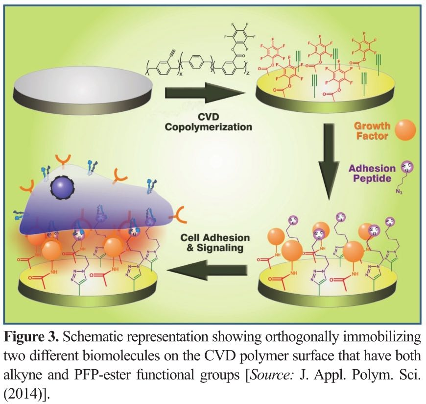 Surface Functionalization through Bioactive Coating Strategies for Advanced Biomedical Technologies
