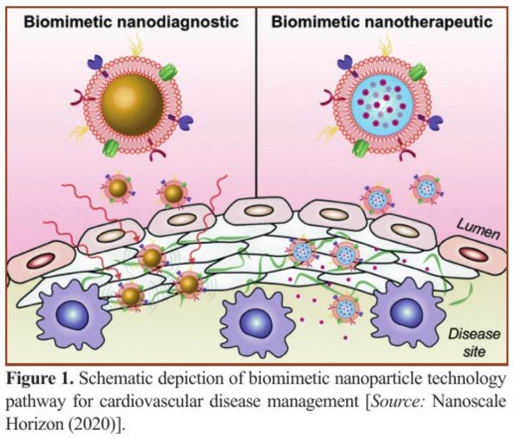 Biomimetic Nanoparticle Technology Takes Nanomedicine to the Next Level